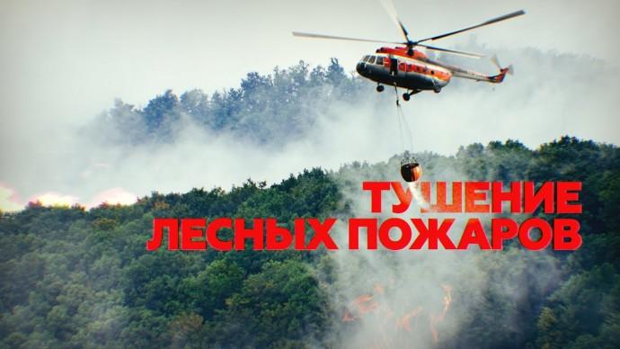 В удалённых районах Красноярского края тушат лесные пожары — видео