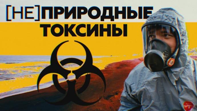 Микроводоросли или утечка токсинов: на Камчатке отрабатывают две основные версии загрязнения воды