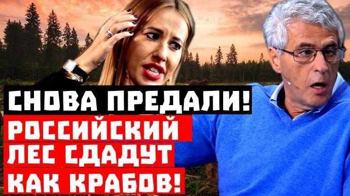 Стыдно, Кремль опять не спросил Собчак! Российский лес сдадут, как крабов!