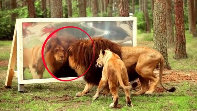 12 Смешных Реакций Животных на Отражение в Зеркале
