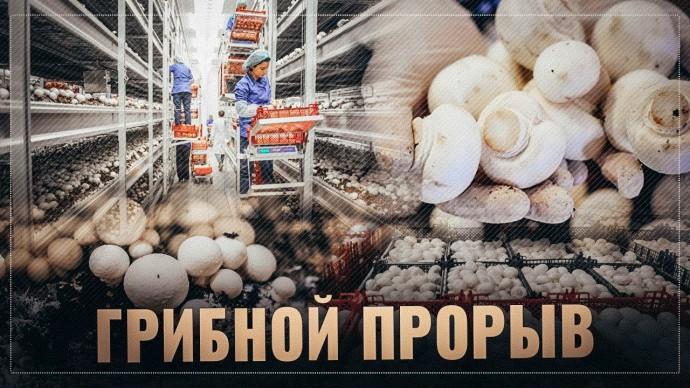Грибной бум: Россия совершает очередной прорыв