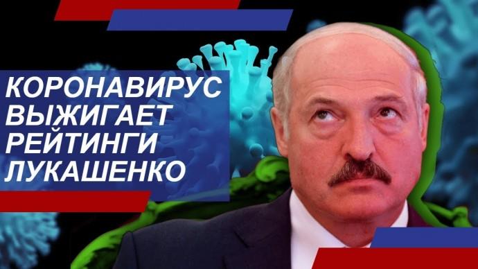 Коронавирус выжигает рейтинг Лукашенко с эффективностью лазера