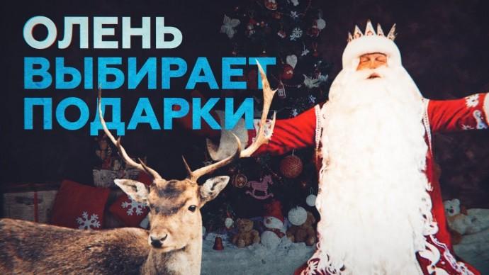 Выбор Валерчика: в Сургуте олень помог Деду Морозу подобрать подарки для детей