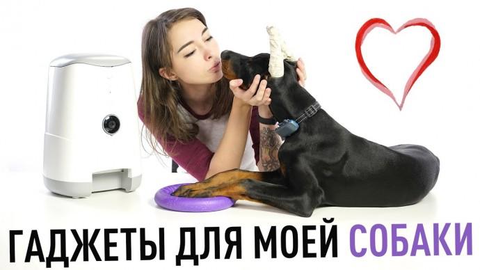 Умные гаджеты для моей собаки - -трекер, кормушка, поилка и электрическая кость