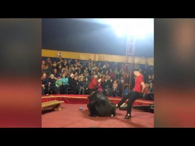 СК возбудил уголовное дело после инцидента с медведем и дрессировщиком в цирке в Карелии