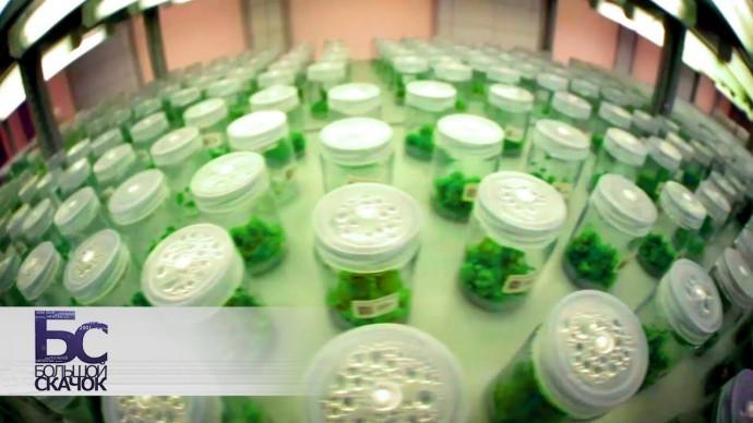 Зелёные клоны | Большой скачок