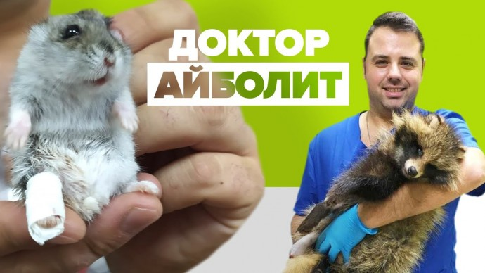«Я самый счастливый человек»: ветеринар из Белоруссии ставит на лапы животных с тяжёлыми травмами
