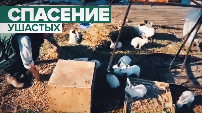 В Амурской области из-за подтопления соорудили плот для спасения кроликов