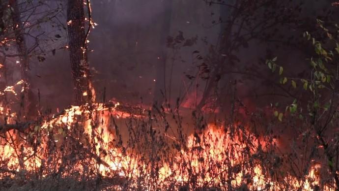 Спасатели частично локализовали лесные пожары в Воронежской области