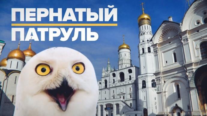 Полярная сова, соколы и филин: как хищные птицы защищают Кремль от ворон
