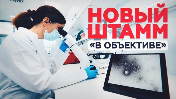 Российские учёные сделали первую в мире фотографию британского штамма коронавируса