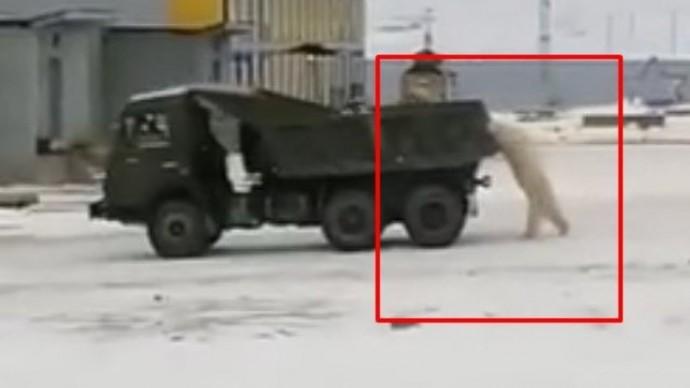 Обычный день в России: белые медведи пытаются угнать КамАЗ в Якутии