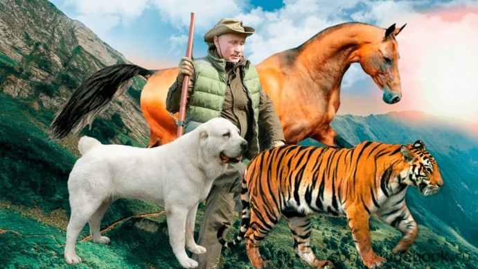 Питомцы ВВП. Каких животных дарили Путину: собаки, лошади, тигры, леопарды, пони и другие
