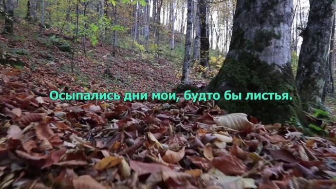 """Алиса Супронова. Стихотворение Инги Хаяури - """"Тихая осень"""""""