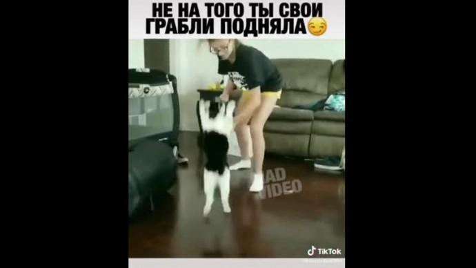 Кот в Атаке
