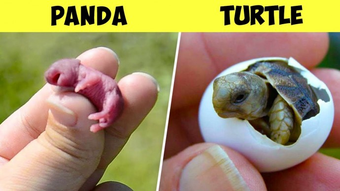Вот Как Выглядят Новорожденные Детеныши Разных Животных