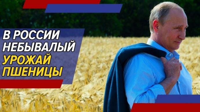 Россия демонстрирует небывалый урожай зерна. Он компенсирует фиаско фермеров ЕС