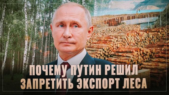 Вся правда. Почему Путин решил запретить экспорт леса-кругляка именно сейчас