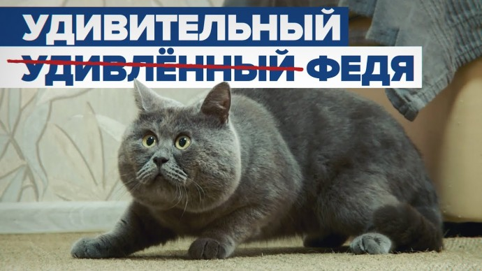 Звезда соцсетей и зарубежных СМИ: как живёт «удивлённый» кот Федя из Ростовской области
